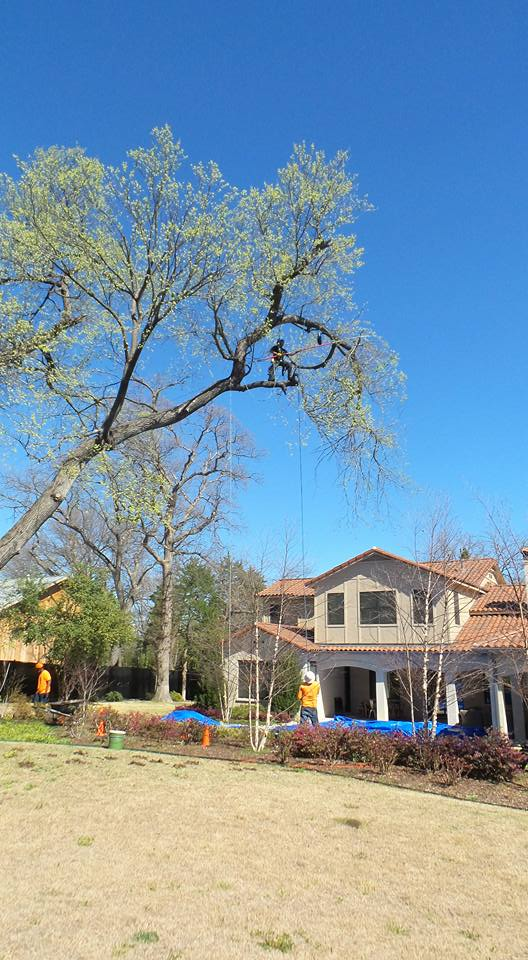 Tree Pruning & Trimming | Plano, Dallas & McKinney, TX