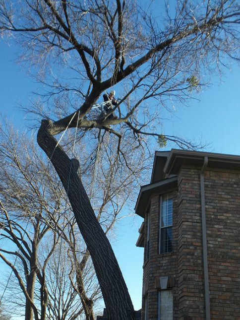 tree pruning mckinney, dallas, & plano tx