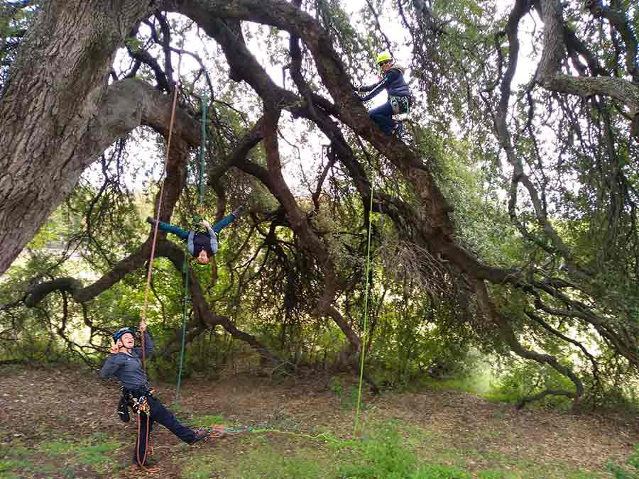 D&J Arborist Tree Services training a new climbing system!