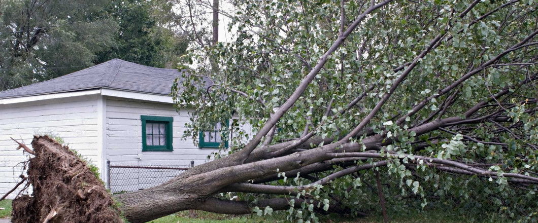 Has your tree been damaged by the Texas storms?